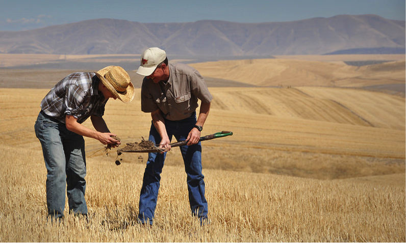 farmers inspect soil health