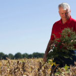 using dicamba on soybeans